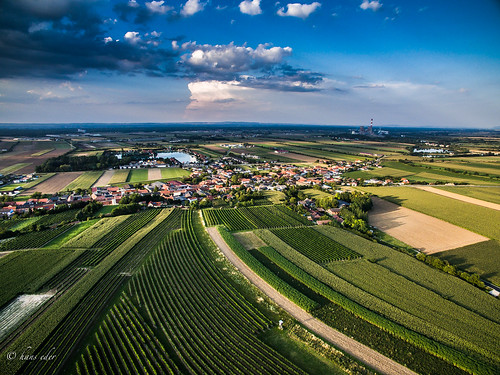 wineyards, trasdorf, lower austria | by hans eder1
