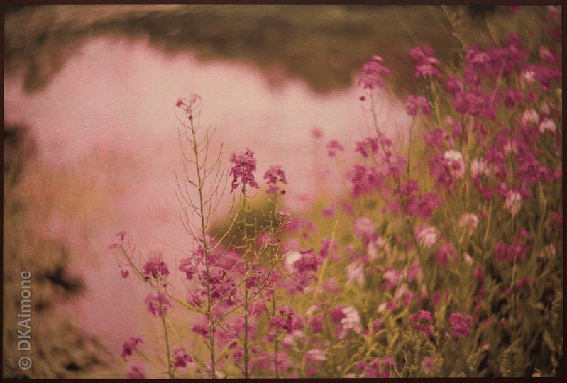 Magenta Flowers Near Water