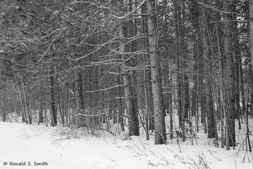 fujixpro2 fujixf2314 boyne landscape blackandwhite monochrome
