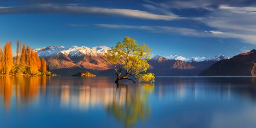 nisifilters aotearoa dawn dylantoh everlooklandscapephotography lakewanaka newzealand sunrise tree wanaka