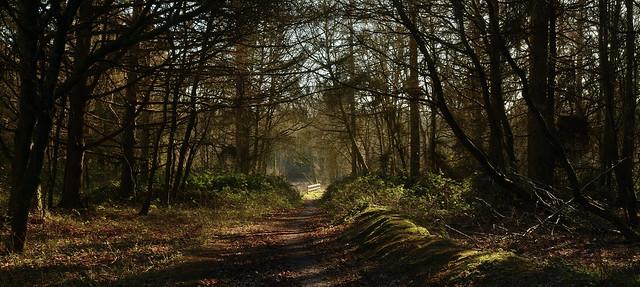 Lodge Pond Trail,Alice Holt Forest