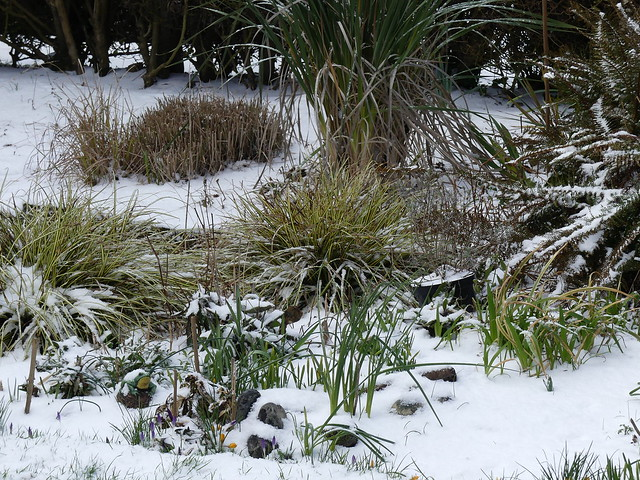 Snow on the garden .