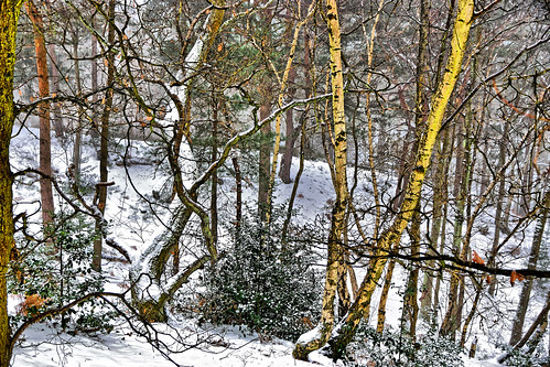 winter spring snow trees woods bushes ice birch 1000v40f ghe
