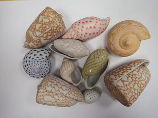 A brand new Batch of 3D-printed Seashells
