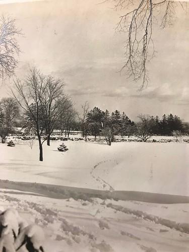 snow 1909 rye jayestate