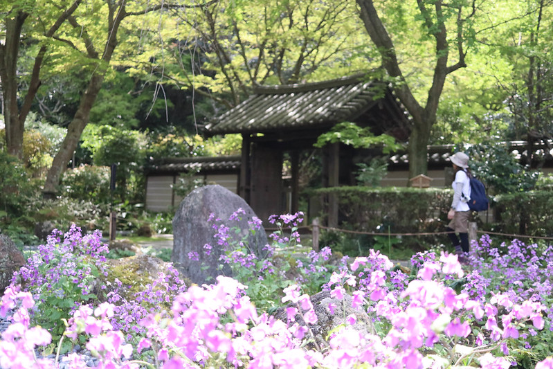 瑞泉寺の花畑