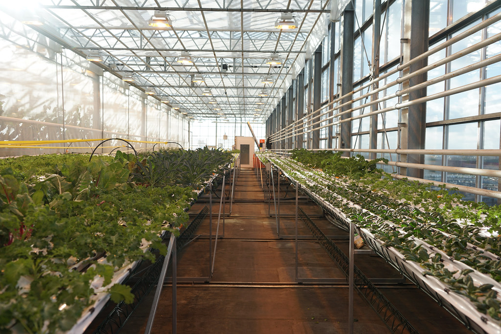The Hydroponic Threat to Organic Food