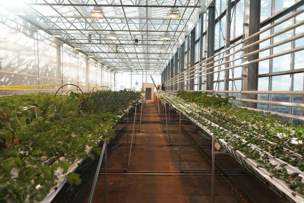 a hydroponic farm