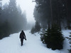 Cestou na Boubín, foto: Petr Nejedlý