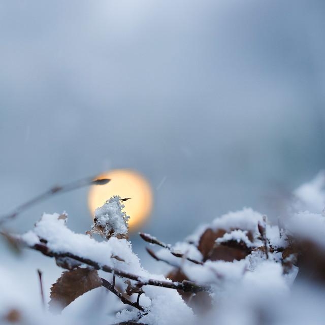 Macro hivernale 02