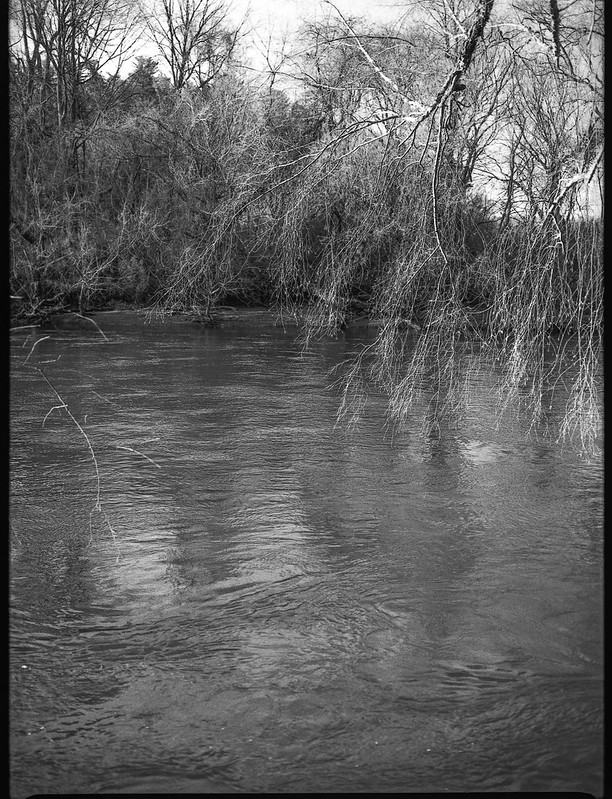 hanging branches, reflections, French Broad River, Carrier Park, Asheville, NC, Mamiya 645 Pro, mamiya sekor 80mm f-2.8, Rollei Retro 400S, Moersch Eco Film Developer, mid February 2018