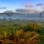 Spruce Flats Bog