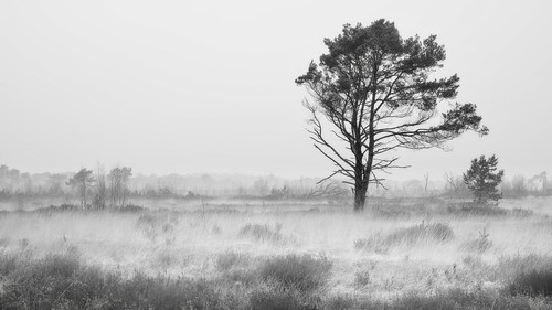 Windy mist in nature | by Jochem.Herremans