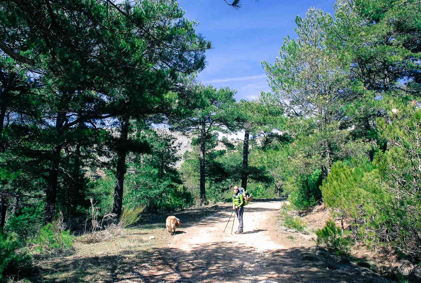 Ganando altura entre pinos y calizas