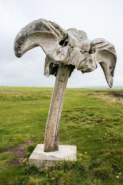 The Whale Bone