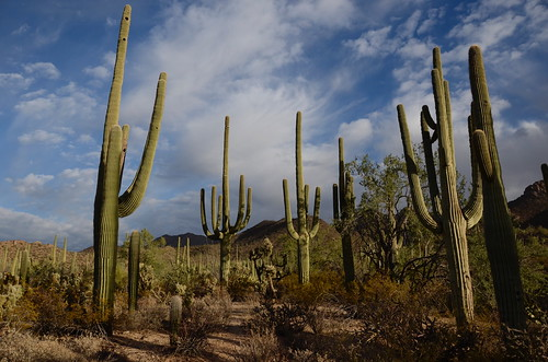 Tucson Gilber Ray Brown Mountain a saguaro forest | by Pierre Yeremian