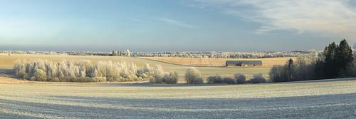 field sky frost winter daylight trees