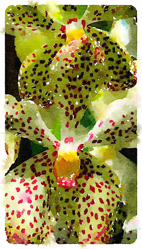 Spotted orchids run through the photo app Waterlogue