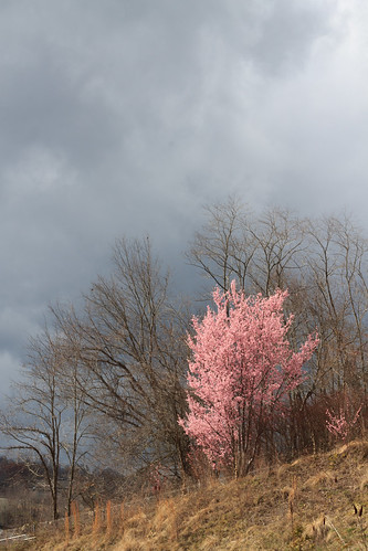 pink clouds nature landscape tree travelphotography landscapephotography northcarolina blossom gray naturephotography bloom appalachia travel nc