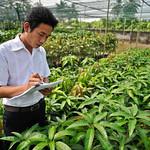 30317-013: Tea and Fruit Development Project in Viet Nam