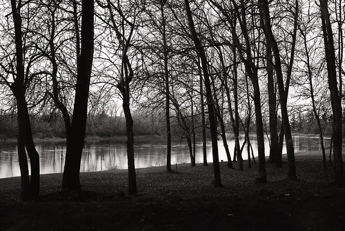 oregon willametteriver 6x9 moskva2 mediumformat trees blackandwhite photo film landscape