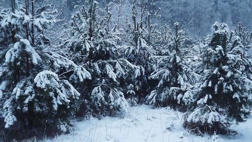 winter lithuania lietuva