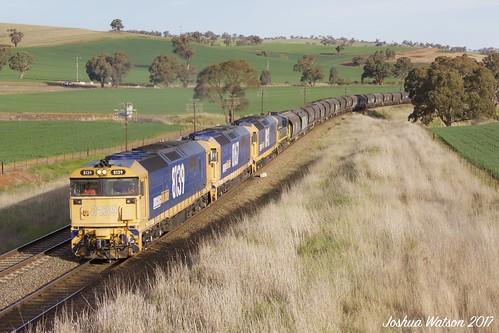 wheat train pn nsw 81class 48class hills paddocks trees eucalyptustrees australianlandscape