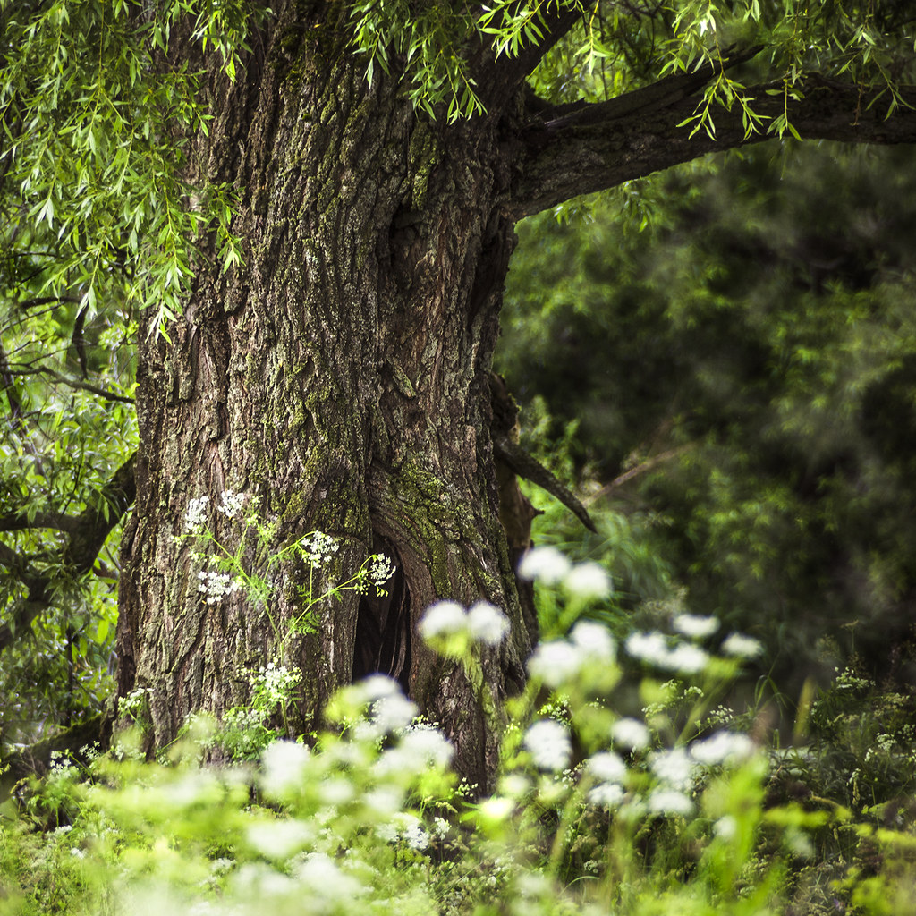 Волшебное дерево / Magic Tree