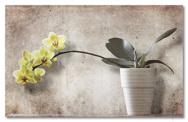 Orchid 1 - by John Runions