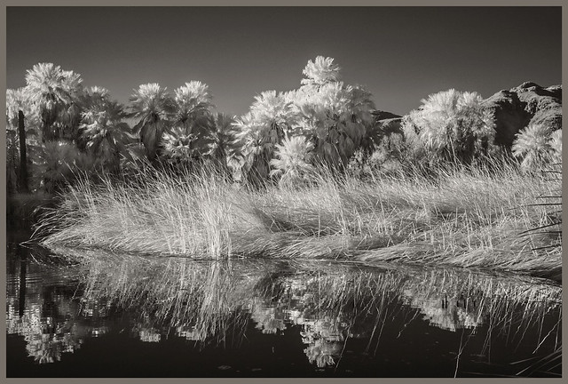 Agua Caliente #6 2018; Water, Reeds, & Palms