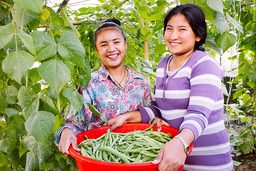 Nepal rehabilitation home gardening project sees continued success; the story of one brave survivor and her courageous journey to escape slavery | by Peace Gospel