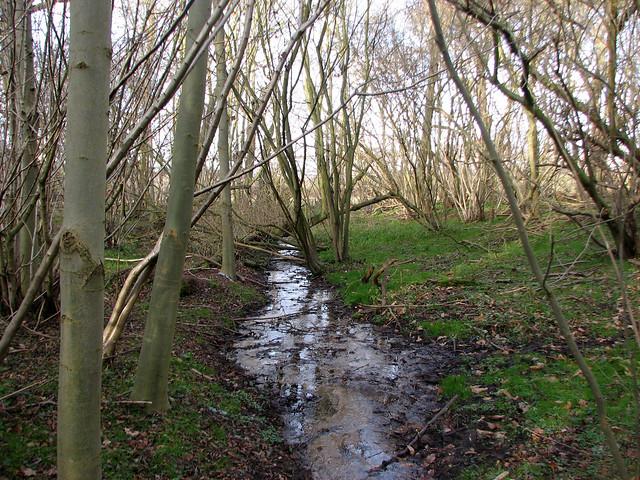 Freston Wood