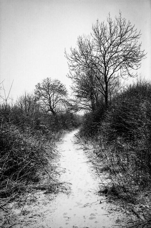 FILM - Snow path
