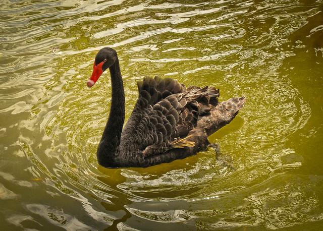 Black swan - a surprising event
