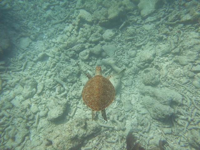 20 March 2021 PM Dive Snorkel Images