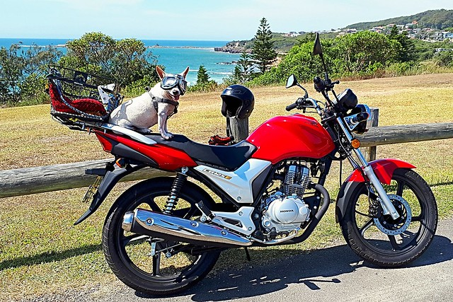 Smoky having another day out riding on his motorcycle at Swansea Heads.