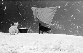 DOG VISIT AGAIN ;)