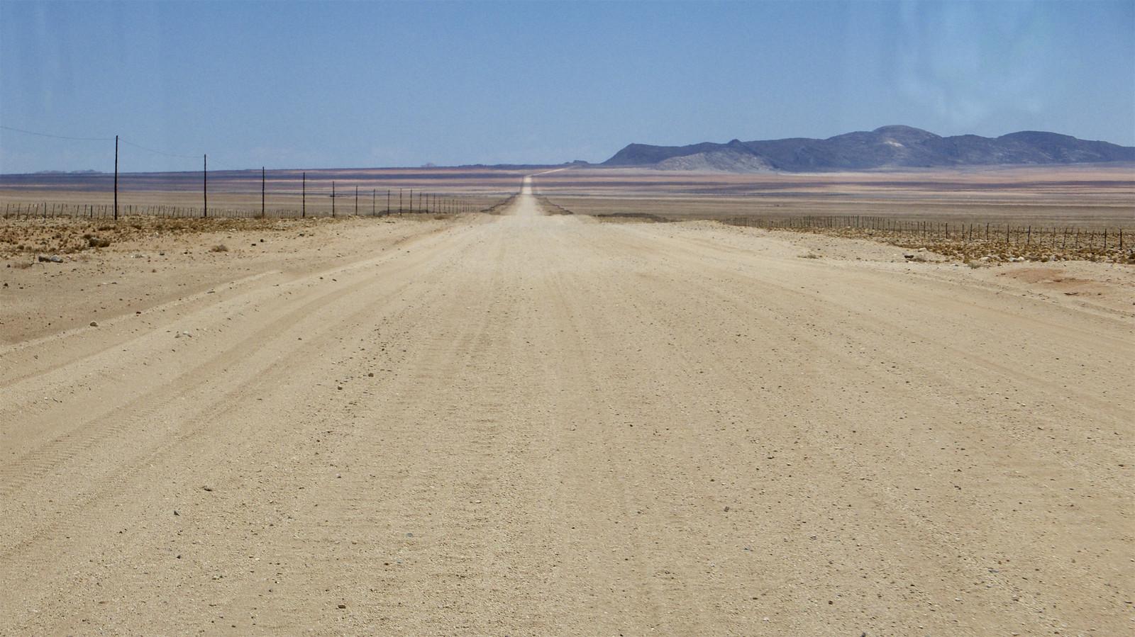Namib Desert Horse - Horse Scanner