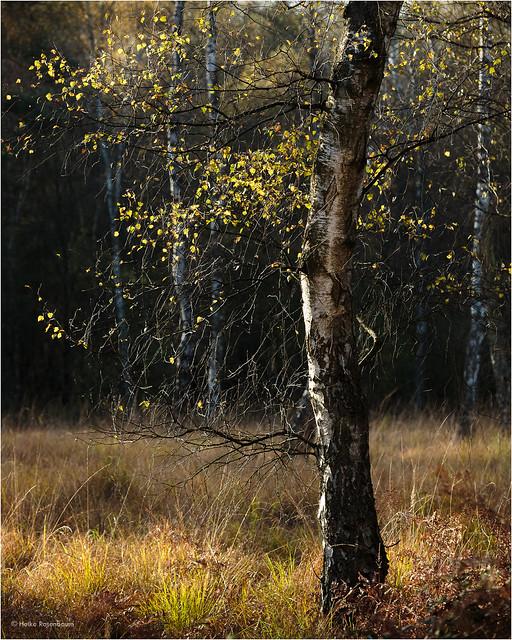 Wahner Heide im Herbst