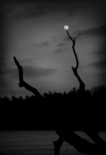 moon bw blackandwhite black white canon 5ds 24105mmis winter night nightsky dark nature art ice cold trees branches mood moody water frozen x cross