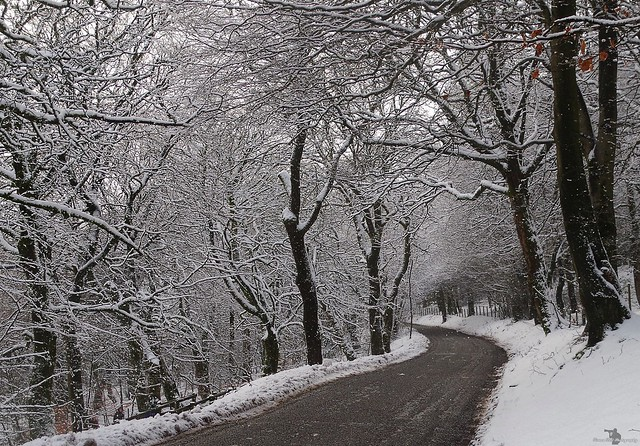 derbyshire road and snow woodland 2018 (1)