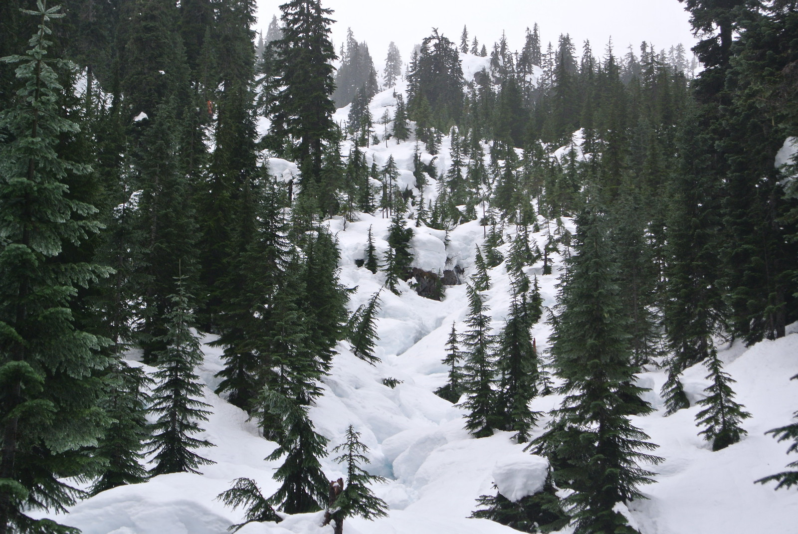 Backcountry Snowshoeing Fieldtrip - lovely hillside