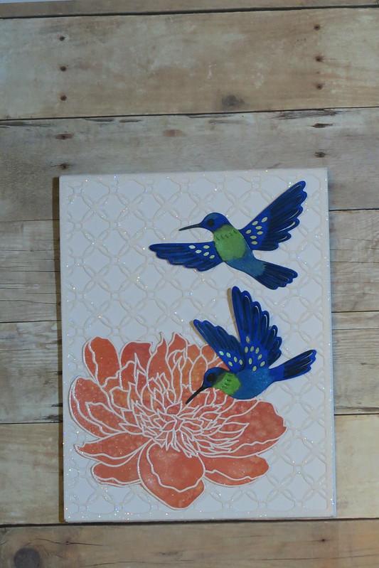 Hummingbird BDay