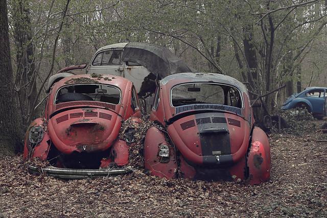 Beetle graveyard