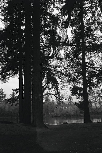 oregon park 6x9 trees moskva2 landscape blackandwhite film photo