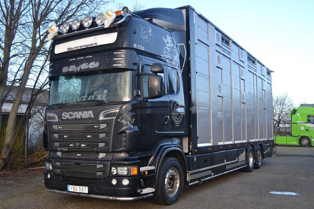 Hose Short King of the Road R730,R620,R800 Scania Vabis Truck LKW kurze Hose