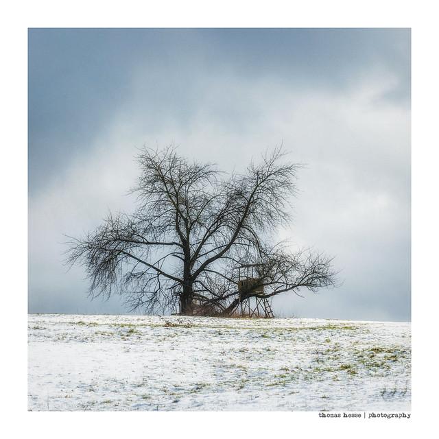 hunter's tree