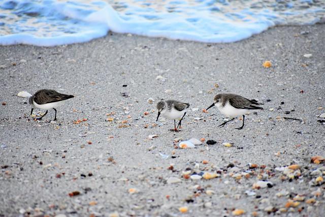 Sea shore visitors