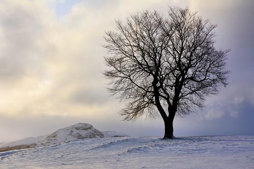 tree winter snow scottishscenery scenicsnotjustlandscapes scenery edinburgh caltonhill scottish scotland outdoor