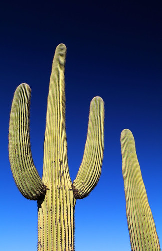 art beauty bright colorful colourful colors colours contrast dark design detail edge light minimalism natural outdoor outside perspective pattern pretty scene serene tranquil sky study sunlight sunshine texture tone weathered world tucson arizona cactus saguaro green blue plant